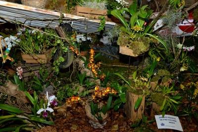 expo-orchidees-abbaye-moncel-2016