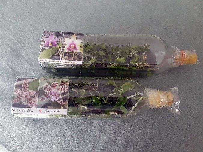 Orchideen in der Flasche