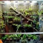 Cool Vivarium Build Orchidkarma