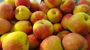Zestar Apples coming from Kiyokawa Orchards.