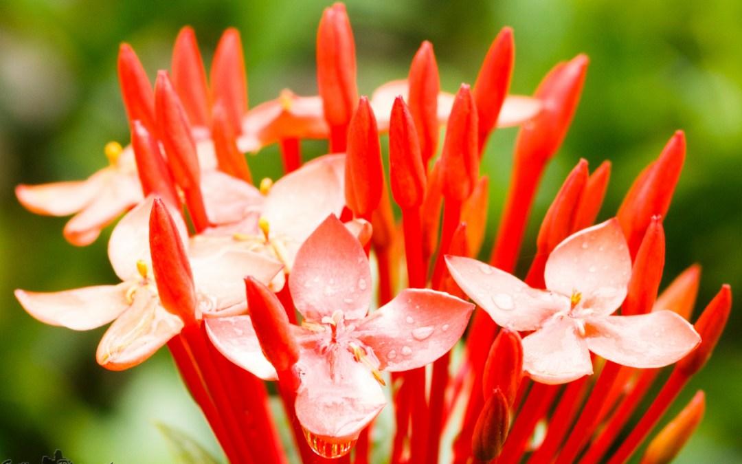 Deshaies, un jardin botanique magique