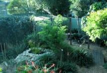Permaculture Backyard Garden