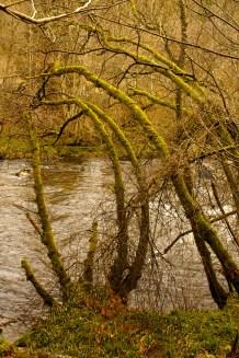 River Tay