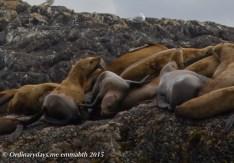 Sea Lions 2
