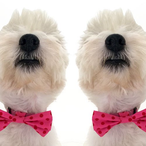 Hand made dog bow tie West highland terrier westie