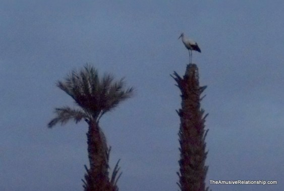 A stork on a palm tree at sunset