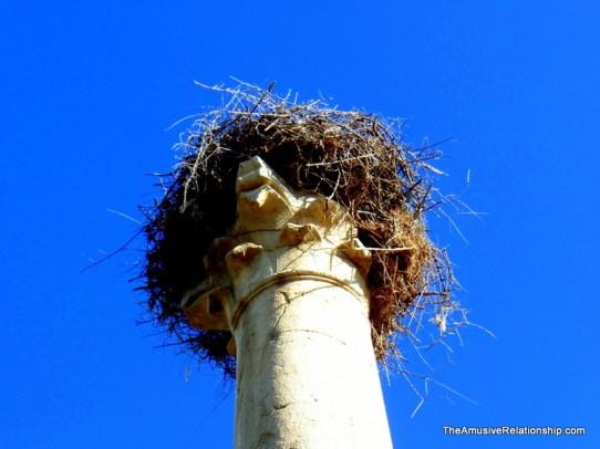 Columnal nest.