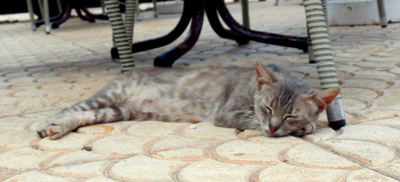 A hotel cat, relaxing.