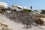 Shelling mussels
