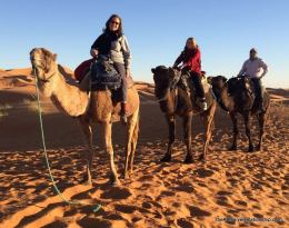 Us and our camels