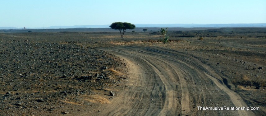 A solitary tree, acacia, we think