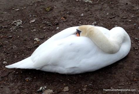 Bruges goose