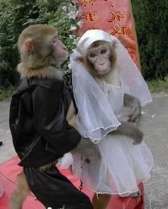 Doua-maimute-s-au-casatorit-in-China