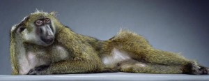 maimuta-sexy