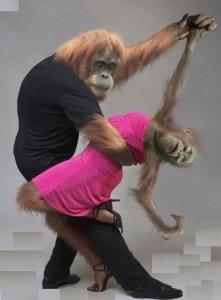 maimute dansind