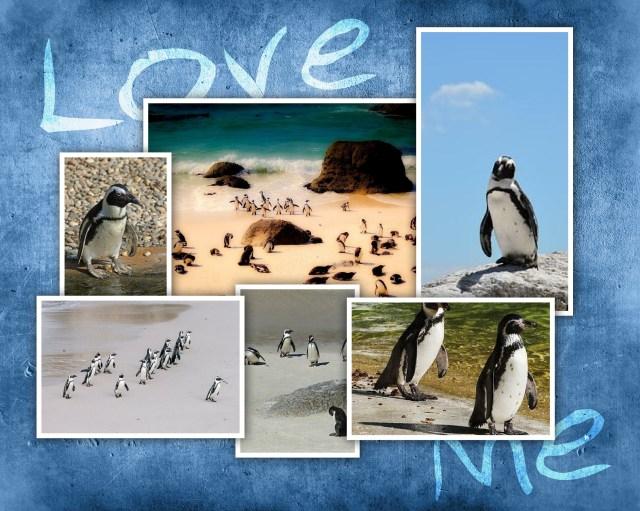 plaja pinguinilor