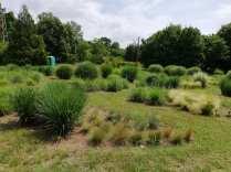 colectia de iarba