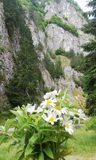 munti in rezervatia piatra craiului