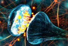 Neuroscientists believe they have found a previously unknown form of communication