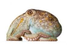 Octopus the genius of the ocean