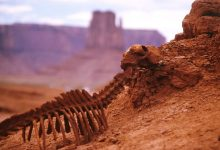 The sixth mass extinction of animals is confirmed