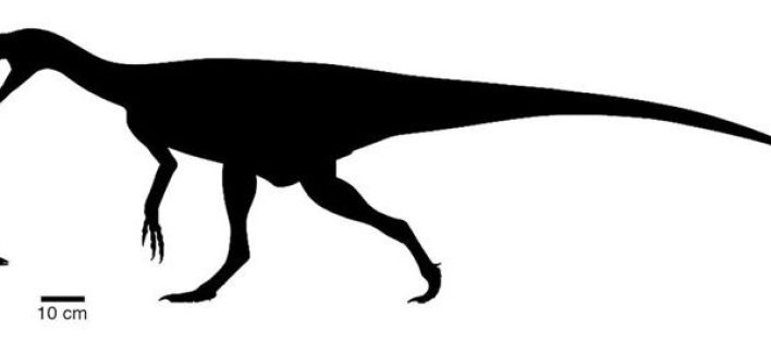 Scientists have discovered a tiny ancestor of dinosaurs 3
