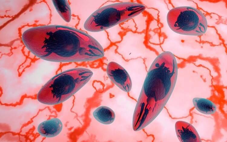 Toxoplasma Gondii 08 750x508 1