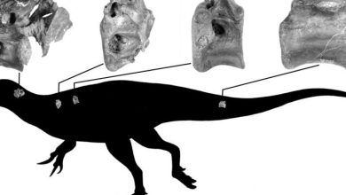 Photo of Paleontologists discovered a new species of dinosaurs