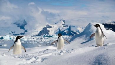 Photo of The disappearance of penguins and the melting of glaciers
