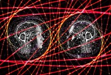 Why men and women have different brain sizes