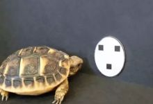 Photo of Scientists find similarities between baby and baby turtle