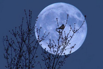 Russians will be able to observe the blue moon