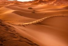 Photo of More than a billion trees found in and around the Sahara