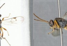 The wasp rider was first photographed spearfishing