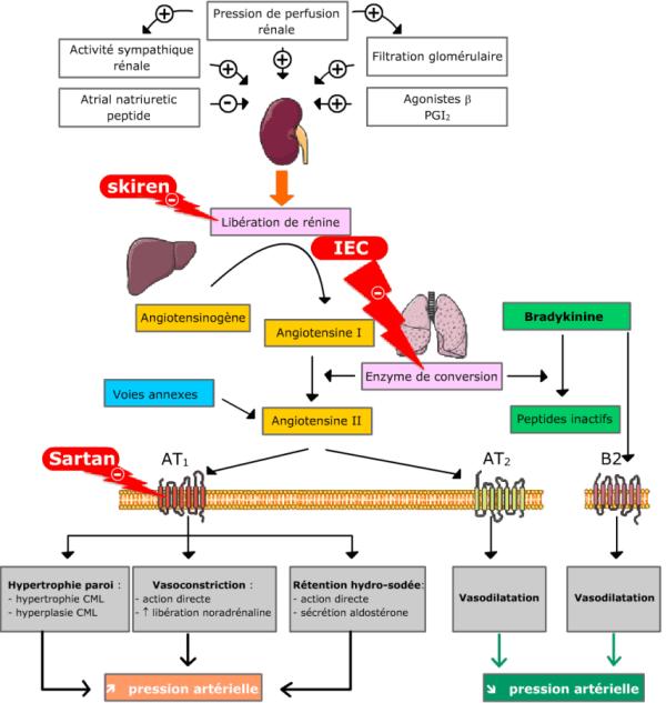 hypertension artérielle traitement