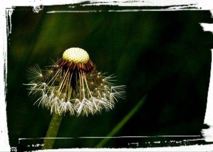 Når du glemmer dig selv og udelukkende plejer andre og deres velbefindende, risikerer du at stå tilbage som en afblomstret halvvissen blomst!