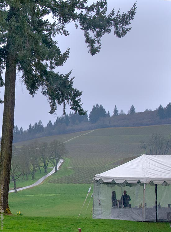 tents at Stoller Vineyard, site of 2014 and 2015 events