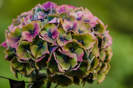 Jewel Tone Antique Hydrangea Flowers