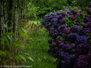 Deep Purple Hydrangea Wedding Flowers