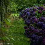 Deep Purple Hydrangea Wedding Flowers