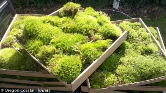 Fresh Mood Moss 3.09.18