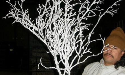 White Flocked Flowering Dogwood Branches