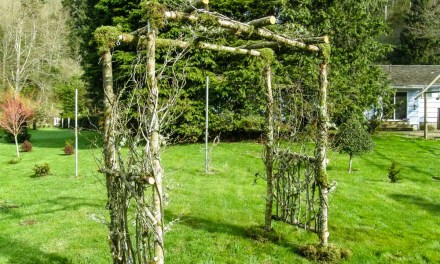 Custom Birch Wedding Arches, Pergolas, and Chuppah.