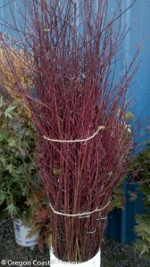 Hand Stripped Red Dogwood Branches