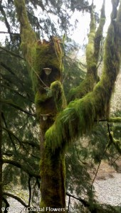 Specialty Decorative Mossy Branches