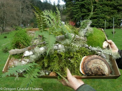 Forest Droppings feature specialty mosses & lichens harvested on the forest floor