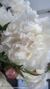 White Bridal Bouquet Peonies