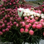 Wholesale Pink Peonies