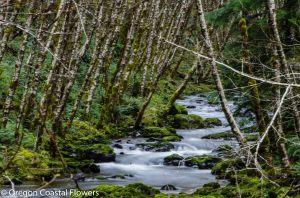 birch poles-1