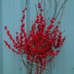 Red Holiday Ilex Berries